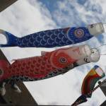 """Carp Streamers"" by Crowstoner"