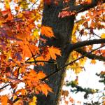 """""""Brown leaves in autumn"""" by MatteoCozzi"""