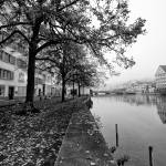 """River Limmat bank trees"" by MatteoCozzi"