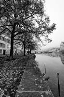 River Limmat bank trees