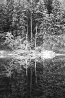Forest Reflected on Mountain Lake