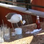 """""""Sea Gull sweetener 2010"""" by JewelsOfDenile"""