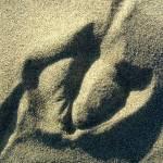 """Sea Gull print on beach"" by JewelsOfDenile"