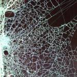 """Spider Web"" by marlenechallis"
