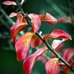 """Fall Leaves"" by raetucker"