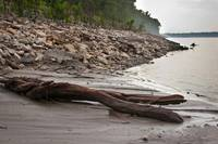 Driftwood on the Banks of Mississippi River