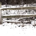 """Fence in the snow"" by Swmr152974"