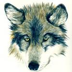 """Wolf"" by vigliotti"