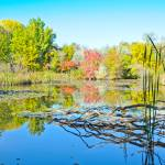"""Lake Reflection - Kathryn Albertson Park in Boise,"" by Amberwatsonwilliams"