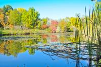 Lake Reflection - Kathryn Albertson Park in Boise,