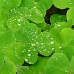 """Raindrops on Sorrel"" by daitengu23"