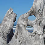 Ocean art prints Blue Sky Driftwood Coastal