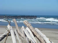 DRIFTWOOD art prints Ocean Coastal Waves Beach