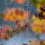 """Autumn Web"" by JPMcCool"