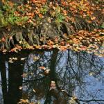 """Reflections of Fall"" by KsWorldArt"