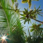 """Sun flare and palm trees 10870"" by RJ"