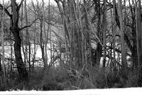Black and white woodsy scene