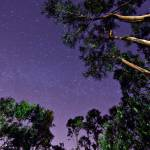 """Trees in Starry Sky"" by AlexanderWunsch"
