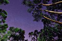Trees in Starry Sky