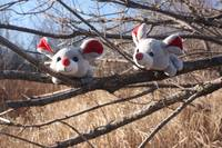 Mice in the Forest