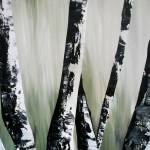 """Birch 9"" by FradetFineArt"