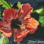 """""""Hibiscus"""" by jonathanwangsgard"""