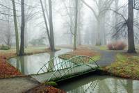 Small Bridge in Misty Park