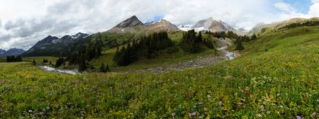 Alpine meadows in Rockies mountains