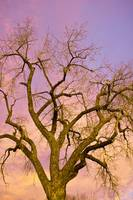 Pastel Cottonwood Sky