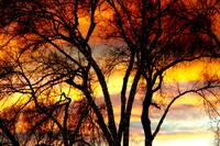 Colorful Silhouetted Trees 15