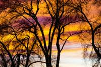Colorful Silhouetted Trees 19