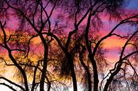 Colorful Silhouetted Trees 27