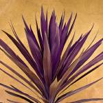 """Giant Dracaena Purple and Stucco"" by johnhansen_art"