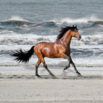 """Horse on the Beach"" by Ninas4otos"