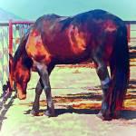 """Corraled Horse"" by artstoreroom"