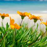 """Orange Beach Flowers"" by sardinelly"