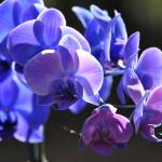 """Violet Orchids"" by ChristineStonebridge"
