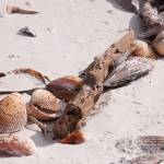 """driftwood & shells"" by ChristineStonebridge"