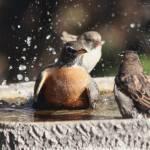 """""""Bath time"""" by cameragal"""