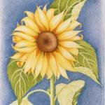 """sunflower - ma passion"" by dominiquee"