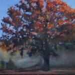 """""""Sundown Oak"""" by GarryTurpin"""