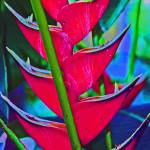 """Heliconia Tropical Flower"" by KsWorldArt"