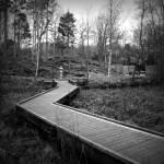 """Winter In The Japanese Garden"" by paulcausie"