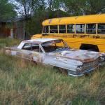 """Caddy and a Bus"" by BearDancerStudios"