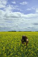 DSC_5736girl in mustard field