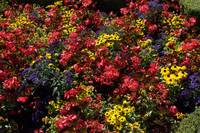 ButchartGardens2