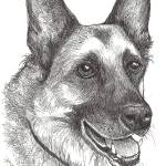 """Cody the German Shepherd"" by BThomasStudios"