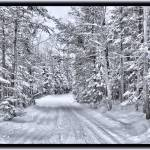 """Rural Road in a Winter Evergreen Forest in Canada"" by Chantal"