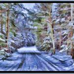"""""""A Secluded Country Lane in a Magical Mystic Woods"""" by Chantal"""
