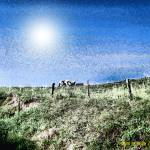 """Cows and Sunburst"" by newdigitalscapes"